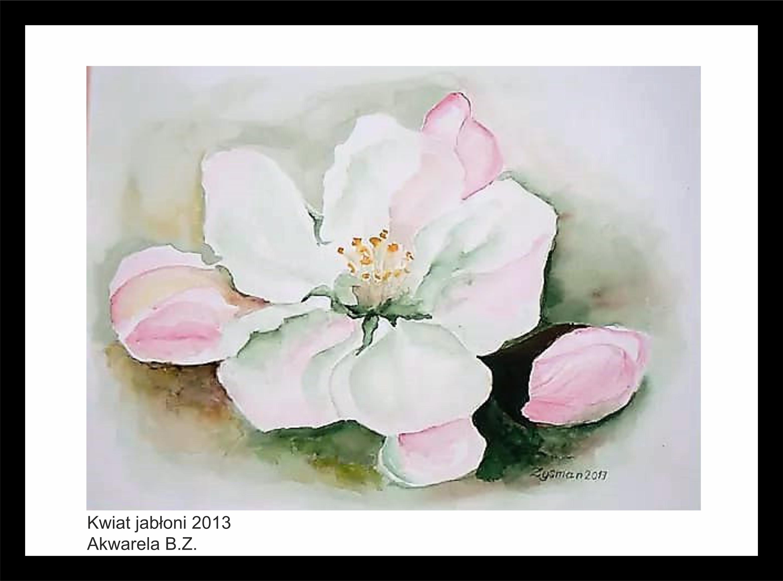 kwiat-jabłoni